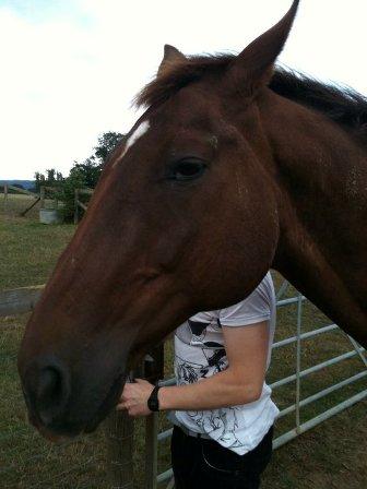 Jo_the_horse